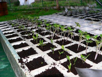 El fascinante mundo de la jardiner a semilleros como - Tierra para semilleros ...