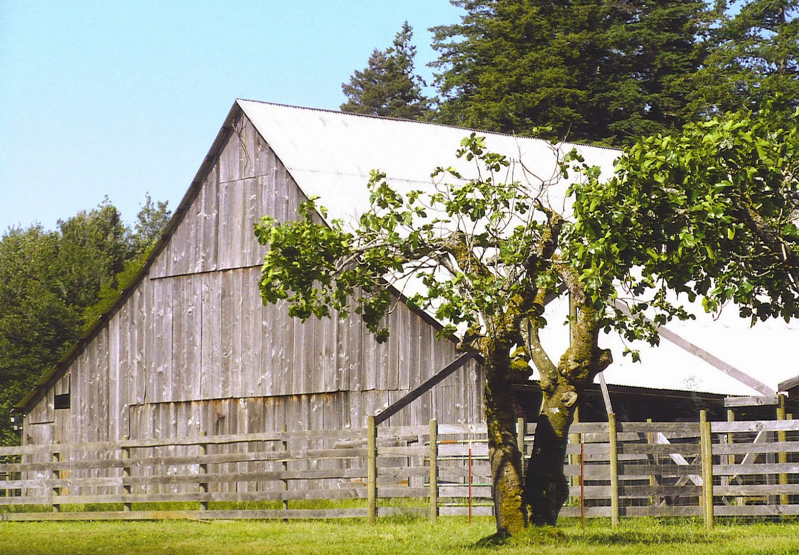 This barn is in Yamhill Oregon