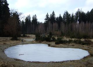 Zugefrorene Tümpel im Forstenrieder Park