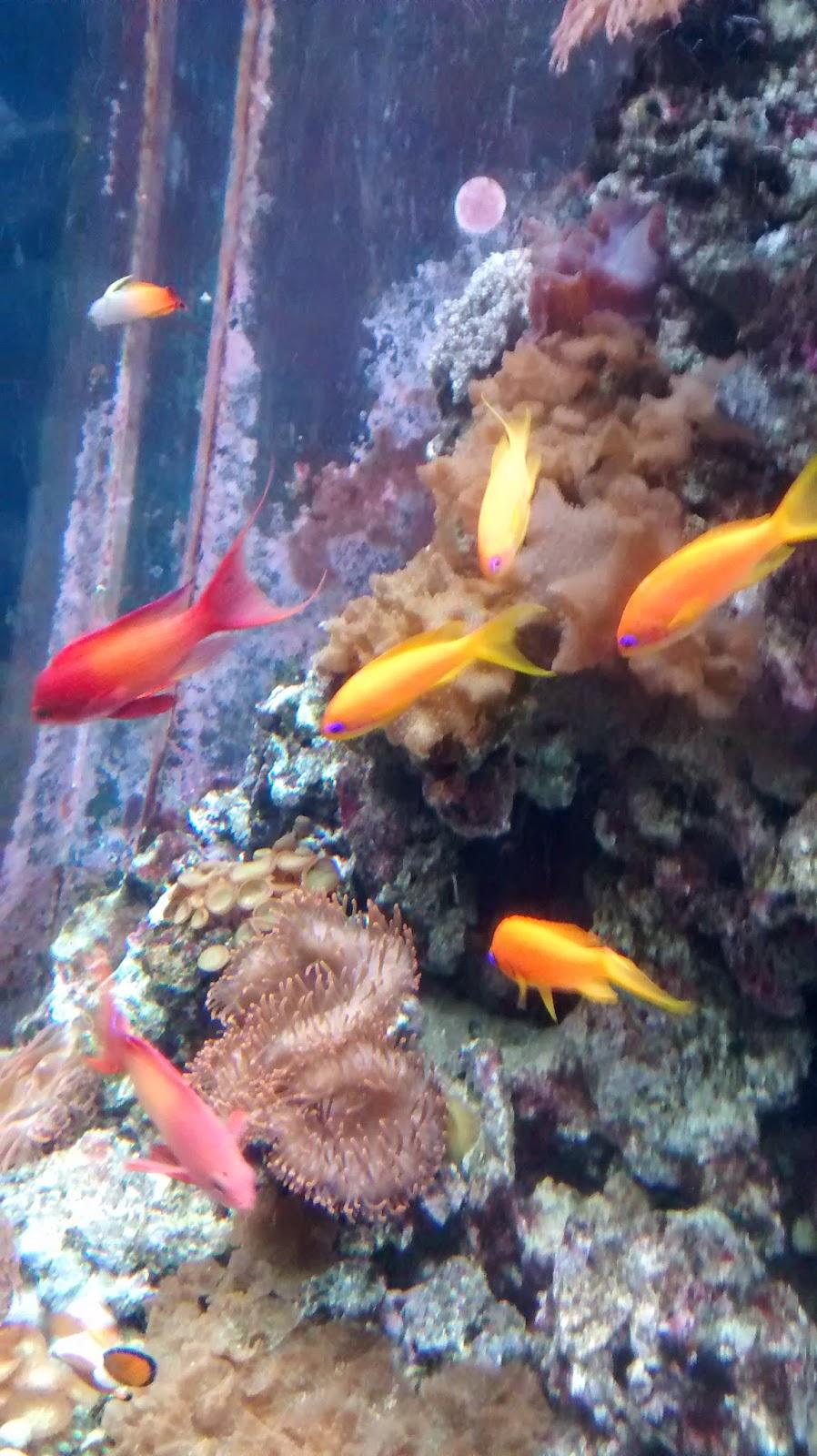 Mit Kind in Berlin Erfahrungen Sea Life Runzelfuesschen