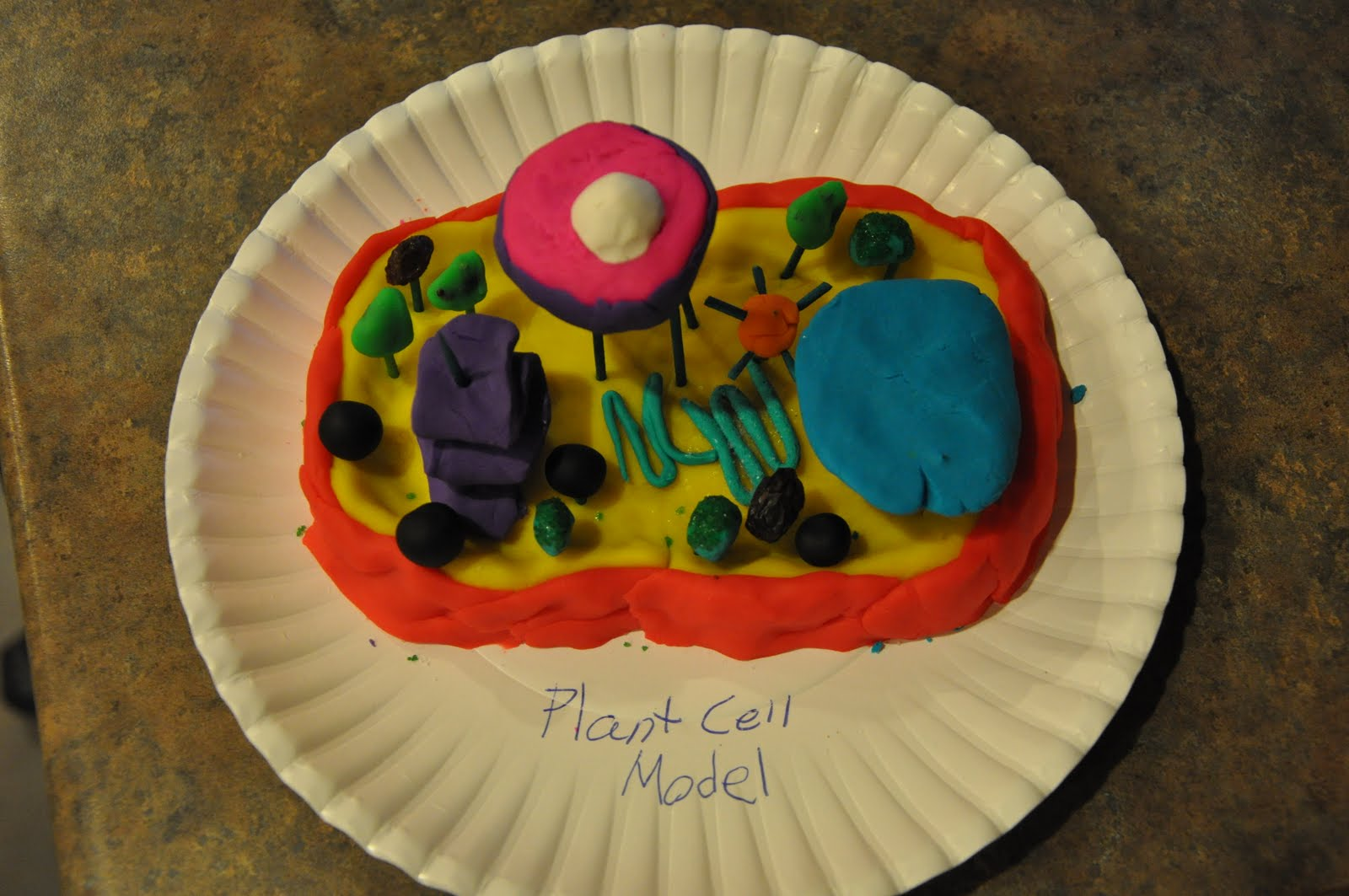 cell model these are jake s life science projects a 3d plant cell ...