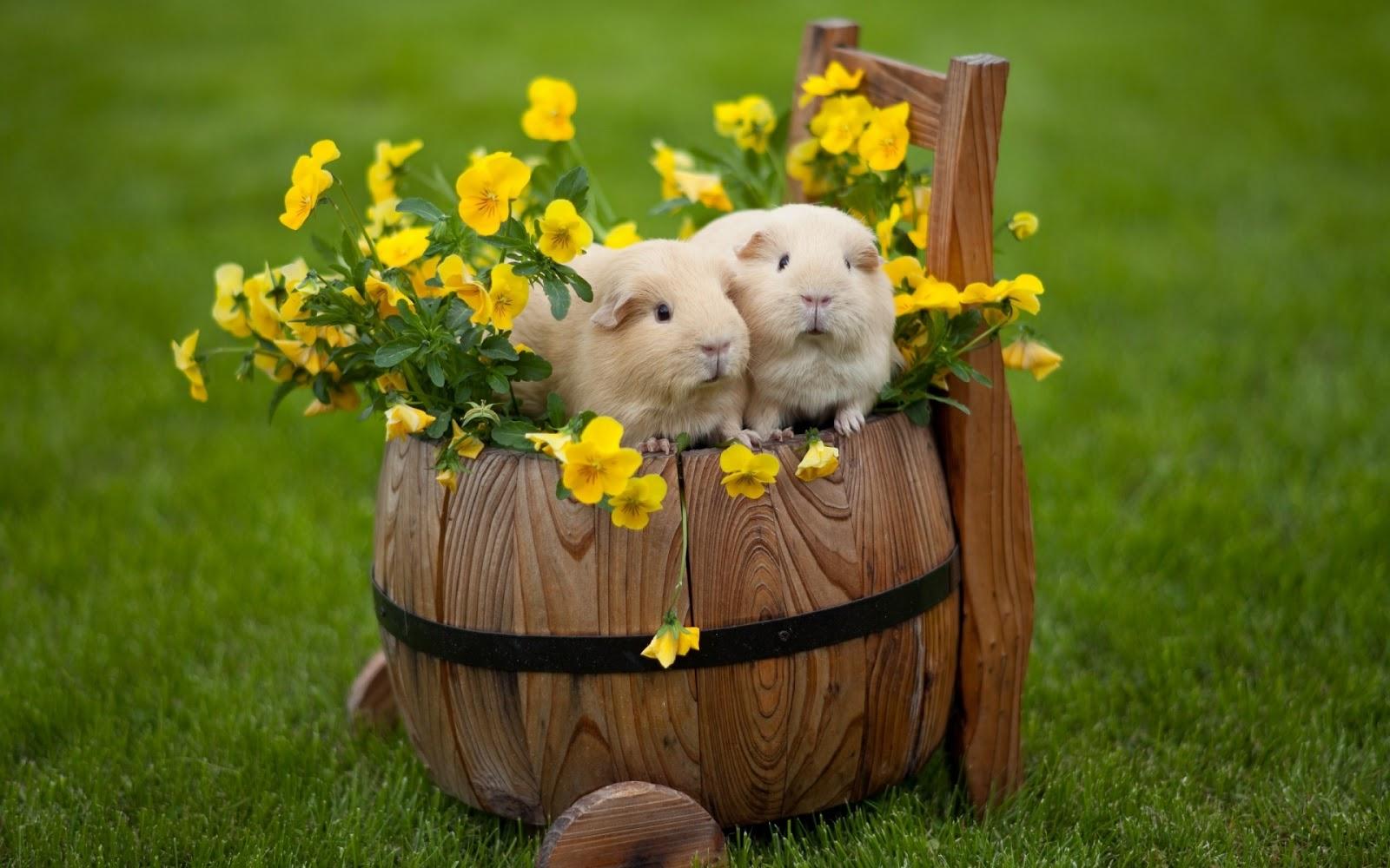 http://2.bp.blogspot.com/-4nn5FjVc8dM/UTA0jbuhaPI/AAAAAAABr8M/FBjyzb_Vl-g/s1600/happy-easter-rabbits-1920x1200-wallpaper-.jpg