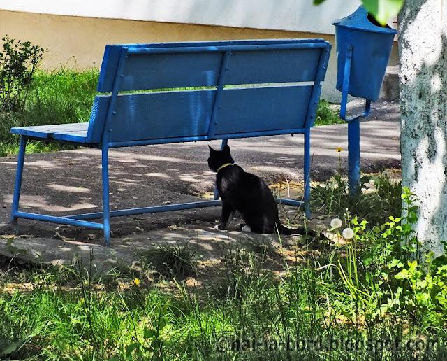pisica sub banca pitesti