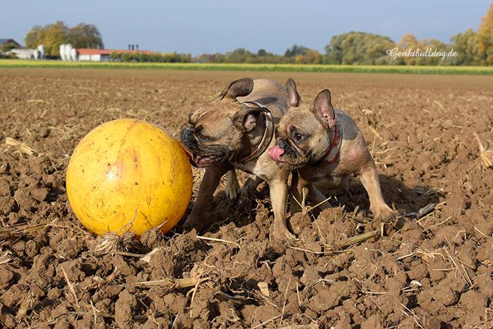 Der Treibball