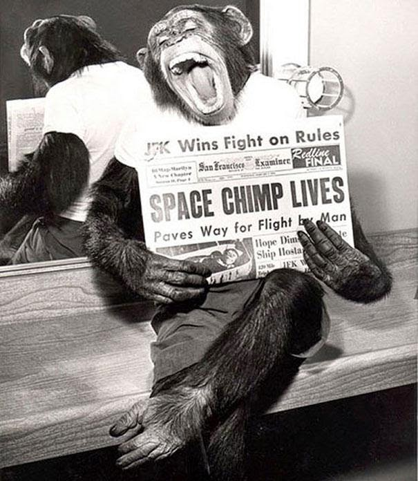 first chimp in to space