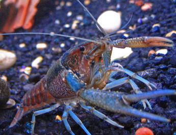 hewan aneh dan unik di dalam laut