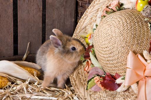 Klatki dla królików
