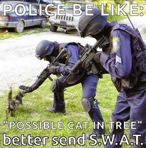 cat and swat meme