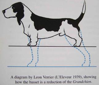 cães patas curtas