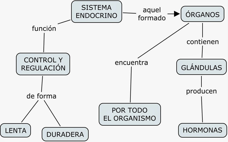 MAPAS CONCEPTUALES SOBRE SISTEMA ENDOCRINO / CONCEPT MAPS ENDOCRINE ...