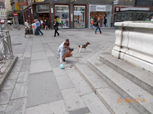 """A young Vienese lady removing her dogs """"Poop"""" on Stephansplatz street."""