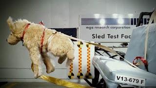 Pet Safety, pet safety harness, pet restraints