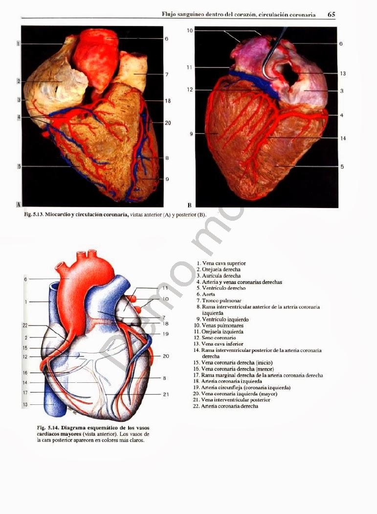 Encantador Diagrama Del Cuerpo Humano Elaboración - Anatomía de Las ...
