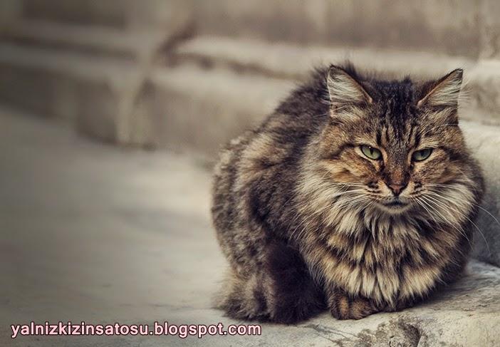 http://yalnizkizinsatosu.blogspot.com.tr/2014/12/galatada-bir-kedi.html