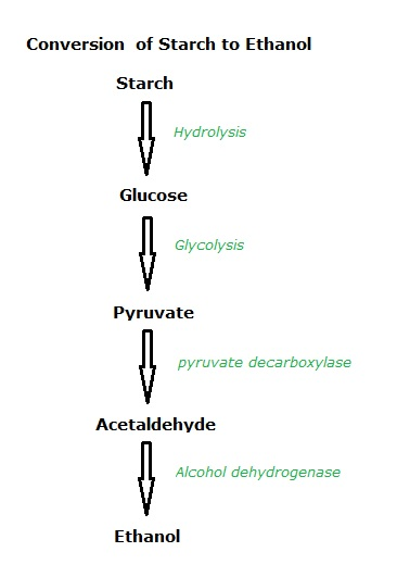 production of alcohol by fermentation essay Net energy analysis of ethanol production wm a scheller and brian j mohr department of chemical engineering, university of nebraska lincoln, nebraska 68588 introduction process designs for a fermentation alcohol plant capable of producing.
