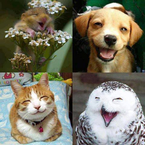 Adorable smiles of animals image