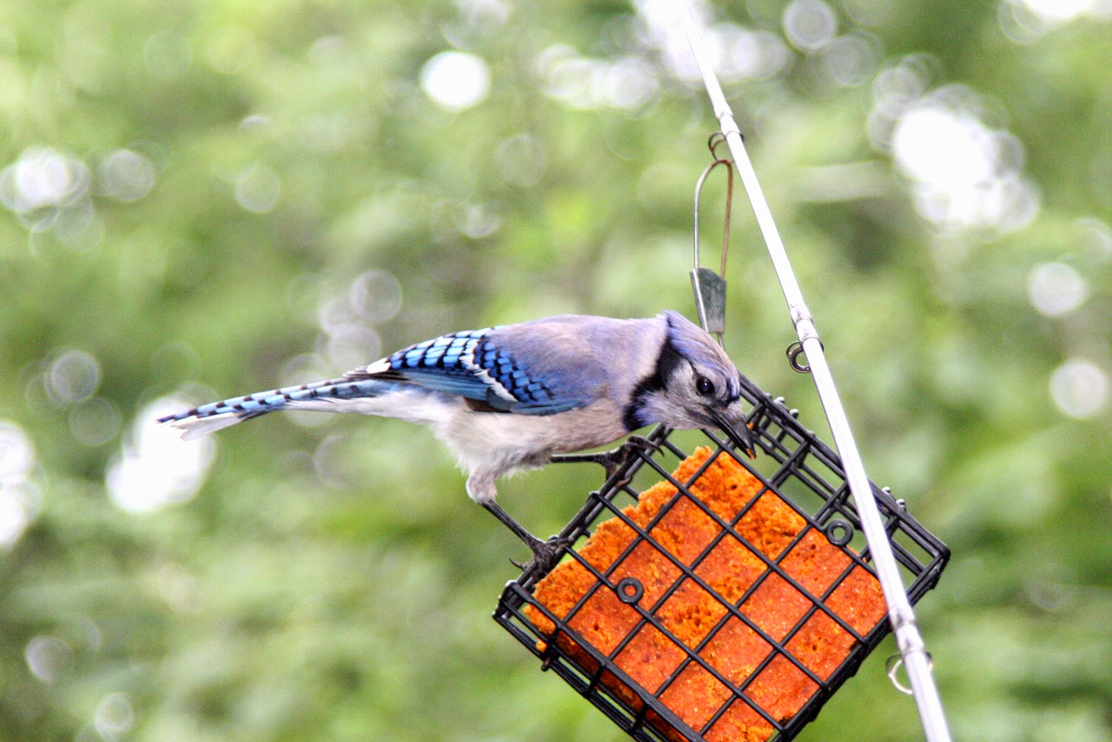 how to make a bird sanctuary in your backyard
