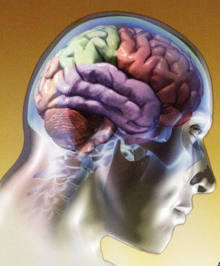 Proteja seu cérebro: use-o ou perca-o