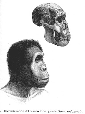 eslabon perdido Homo rudlofensis