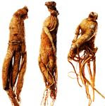 Ginseng plants to treat diabetes
