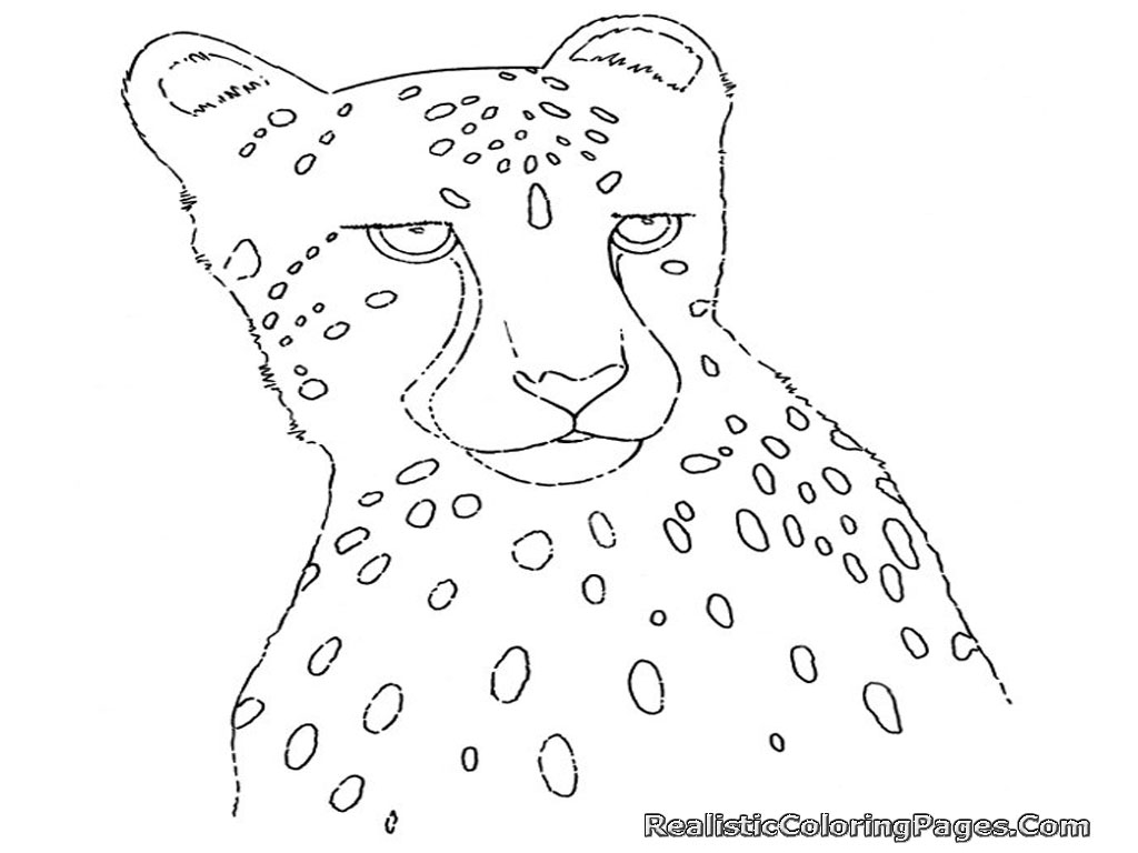 Cheetah Coloring Pages To Print Colouring For Kids