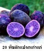20 พืชผักพันธุ์แปลกเก่าแก่