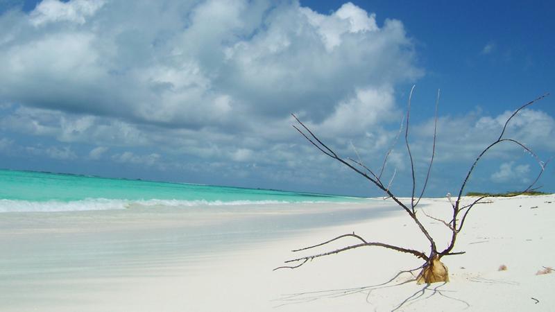 Los roques beach