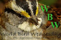 World Bird Wedensday