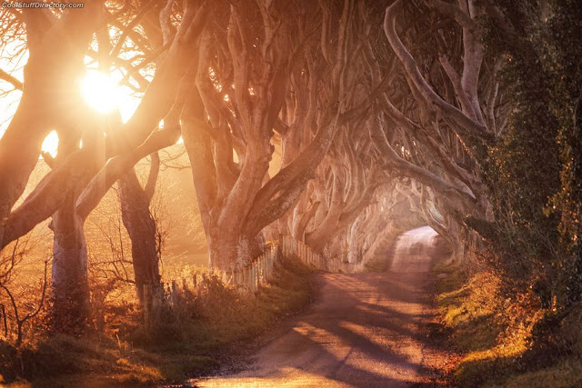 6. The Dark Hedges by Matthias Haker