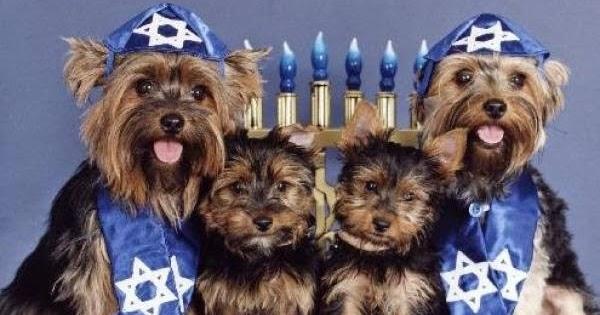 Anti Bark Dog Collars Uk