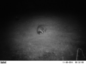 Camera Trap Mammal Photo 6