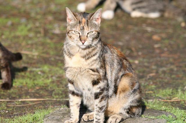 A tortie - torbie feral cat named Hipstamatic