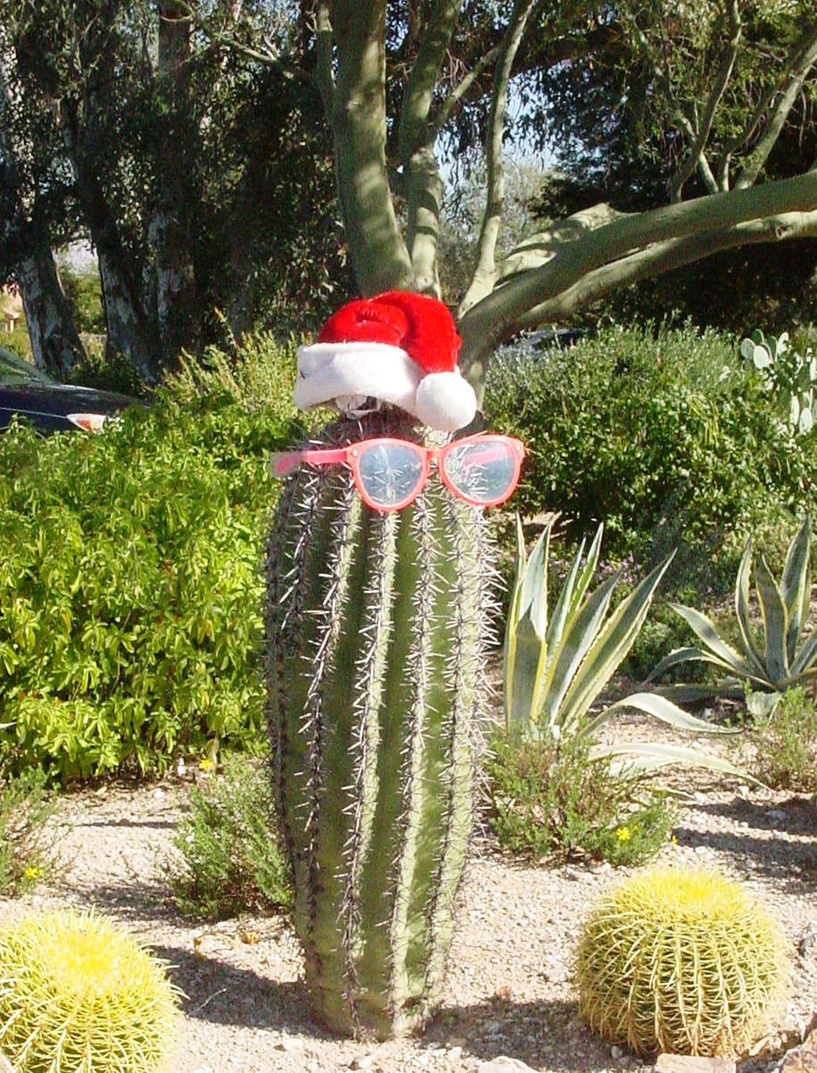 yes it is the time of year when christmas decorations spout up everywhere even on cactus