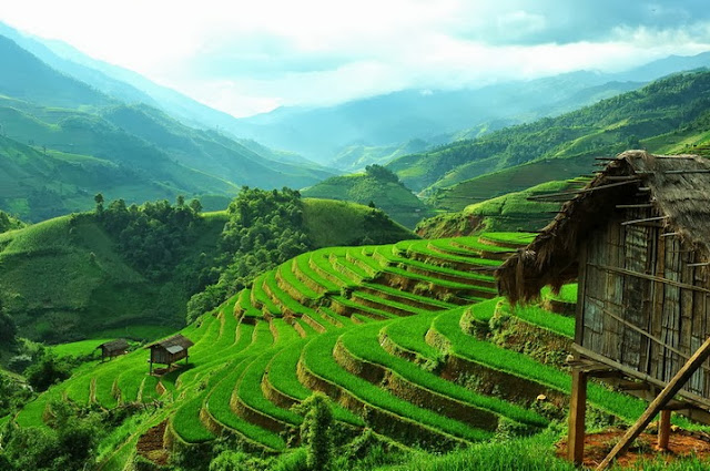 Beautiful Terraced Fields In Vietnam Most Beautiful Places In The World Download Free Wallpapers