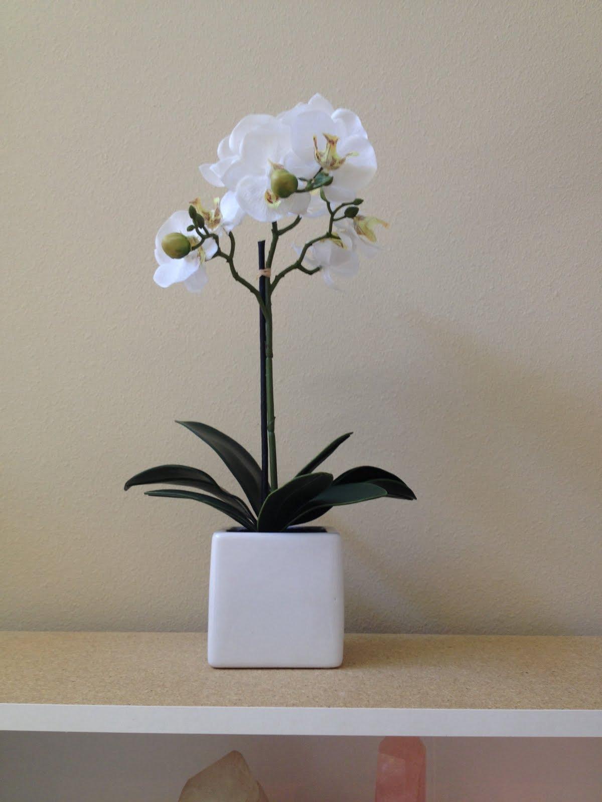 I ADORE white orchids:
