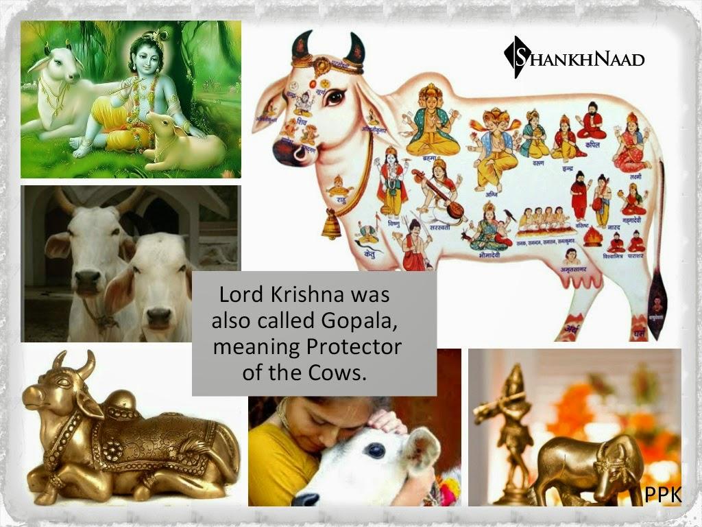 Most Inspiring   Wallpaper Horse Collage - Kamdhenu  Perfect Image Reference_182071.jpg