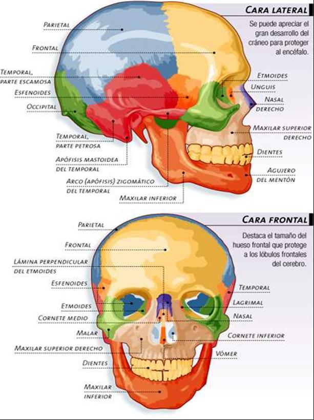 El mundo de la enfermeria: Fracturas faciales