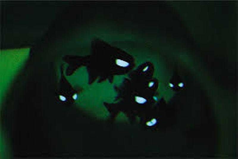 Rocks in my sandals dallas world aquarium - Bioluminescent aquarium ...