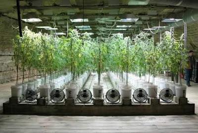 Cultivos bast lidera investigación de radiación