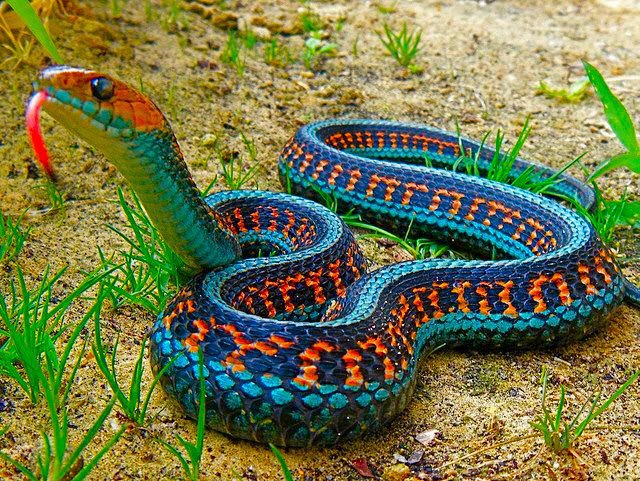 Snakes, Most Beautiful, World, Colorful Snakes, Venomous Snakes, Poisonous Snakes, tapandaola111