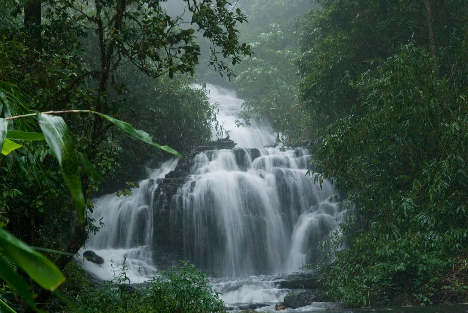 Gavi Pathanamthitta Kerala Trips