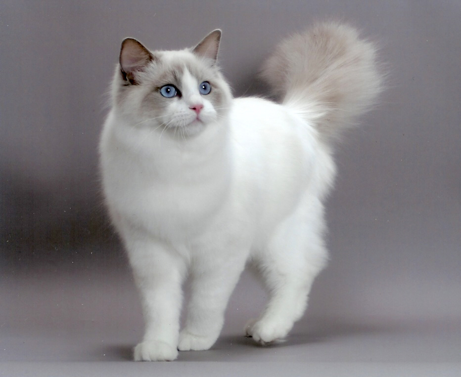 Pada kepala kucing ada mata, telinga, dan hidung