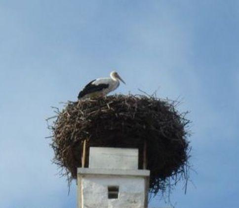 Hochbegabte Vögel?