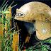 Dapat Medali Emas dengan Penelitian Helm Bambu