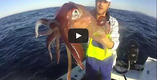 Fiching Big Calamar