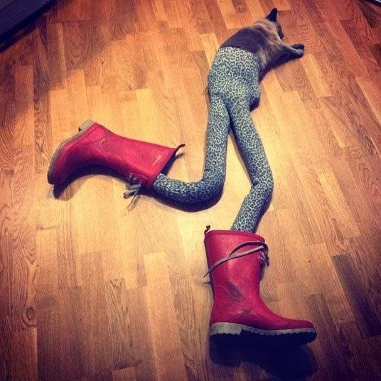 7 gambar lawak kucing pakai stoking