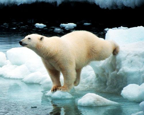 Top 13 Most Exotic Arctic Animals On Earth