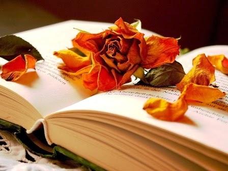 гербарий, засушенный цветок