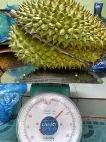 Buah Durian,  Manfaat durian, Khasiat durian, kandungan durian, durian