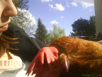 Isabella gallina salvata gioca con una pallina e un tovagliolo